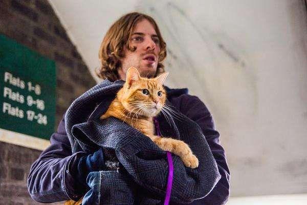 《流浪猫鲍勃》:质朴纯粹的人猫情缘