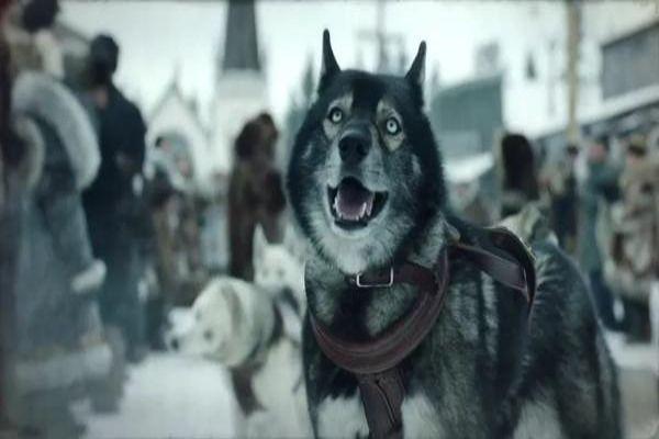 """雪橇犬不是只有""""阿拉撕家"""" 来看看传奇《多哥》的故事"""